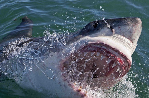 The World's Most Aggressive Sharks – Science A2Z