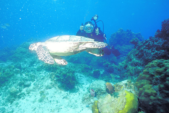 Jamaica: One of the World's Best Diving Spots – Science A2Z